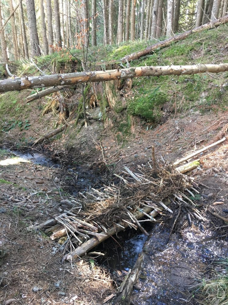 There's only so many dens you can build so we diversified with a woodland bridge project, complete with handrail!
