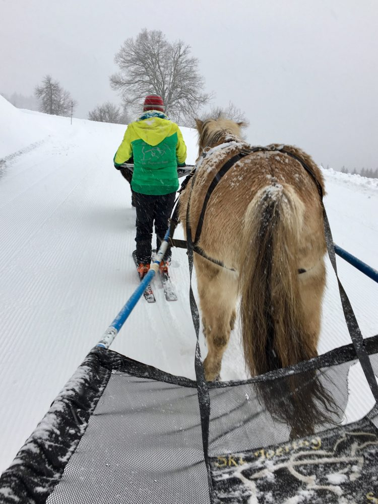 Ski-Joëring in Les Gets, January 2018.