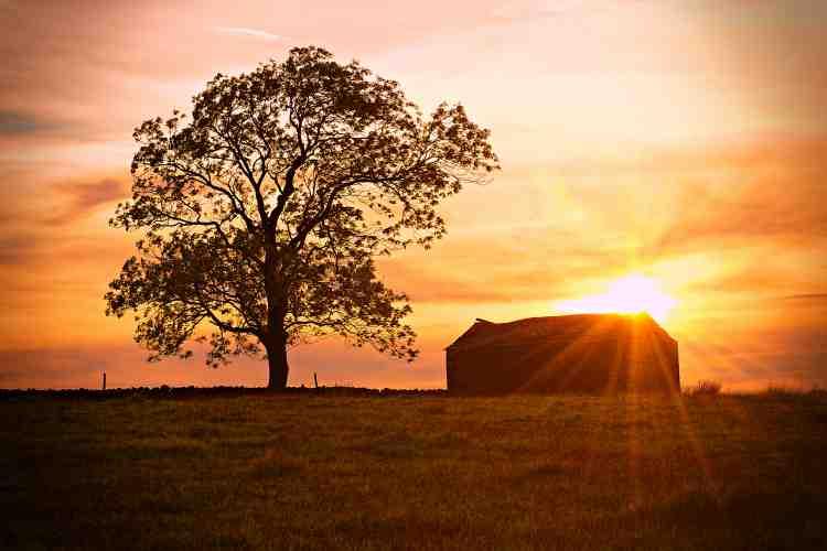 Sunset silhouette tree and barn - Ravenstonedale, Cumbria.