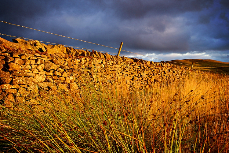 Moody skies and dry stone wall during golden hour. Yorkshire Dales.