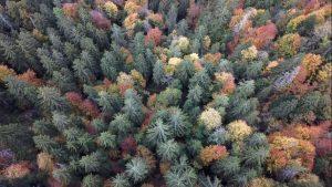 Autumn Trees St Jean D'Aulps 2018