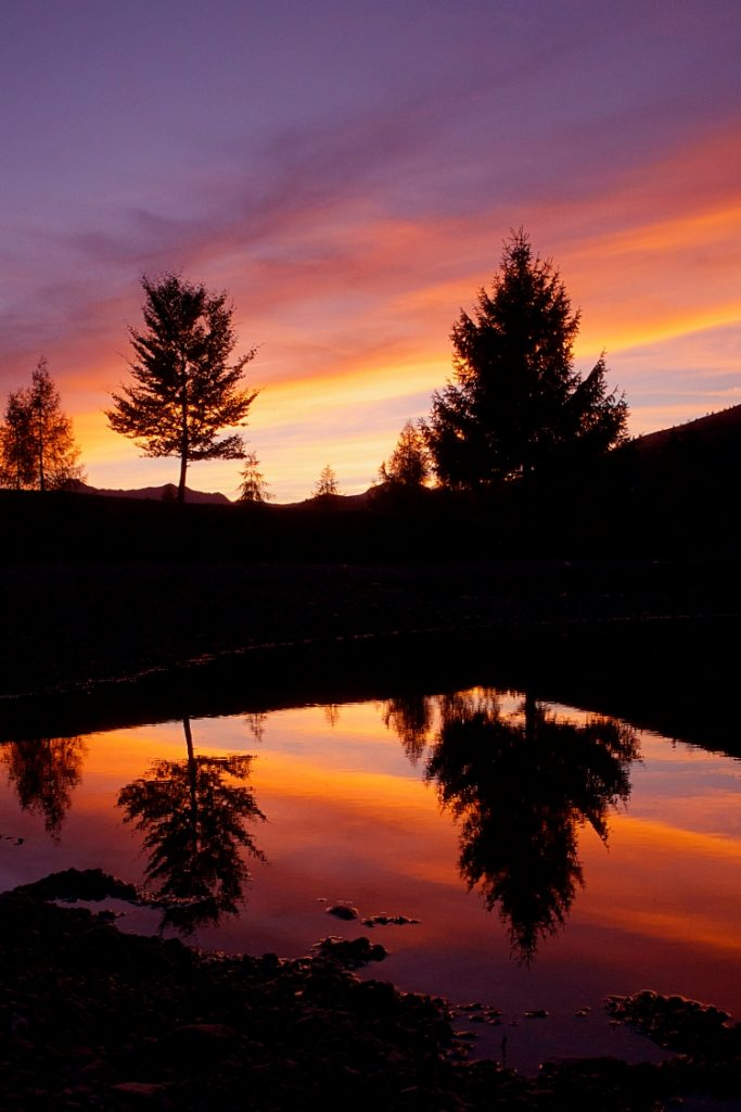 Sunset silhouette trees reflection photograph upstix
