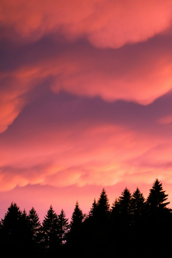 Summer Mammatus Sunset and Trees Silhouette pink purple clouds