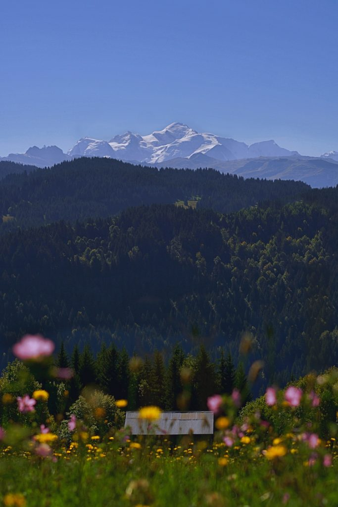 Autumn Wildflowers and Mont Blanc Photograph Up-Stix