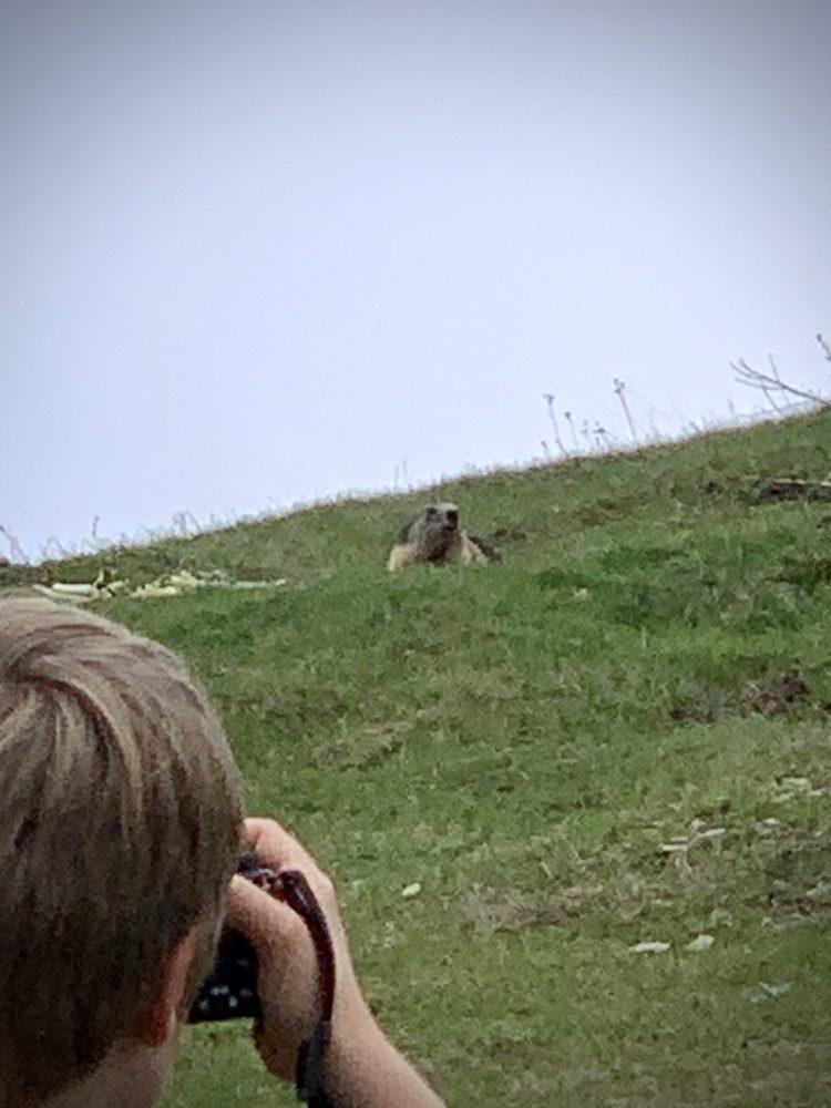 Marmotte!