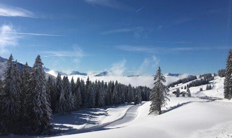 Snow trees sunshine Blue sky mountains Avoriaz, Portes du Soleil, in Winter Up-Stix Images