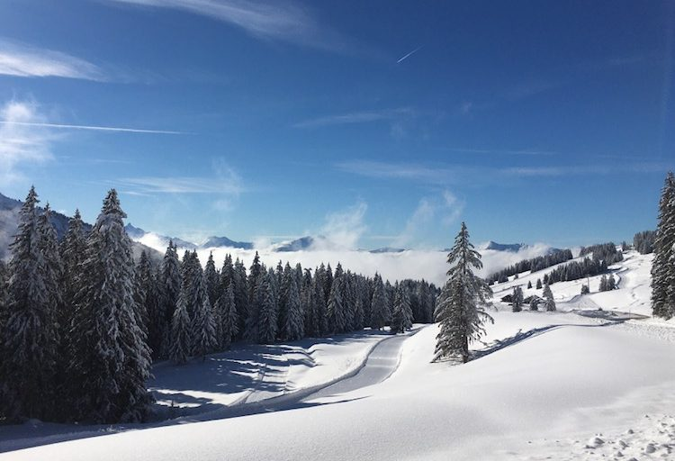 Snow trees sunshine Blue sky mountains Avoriaz in Winter Up-Stix Images