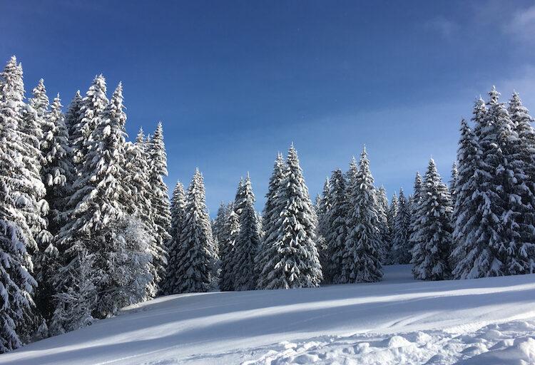 Mega-dump of snow in Les Gets!.. Even Reuteurs got in touch! 😲