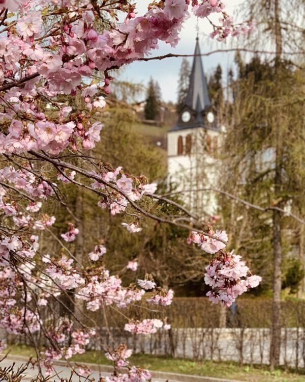 Blossom in Les Gets - April 2021. Up-Stix