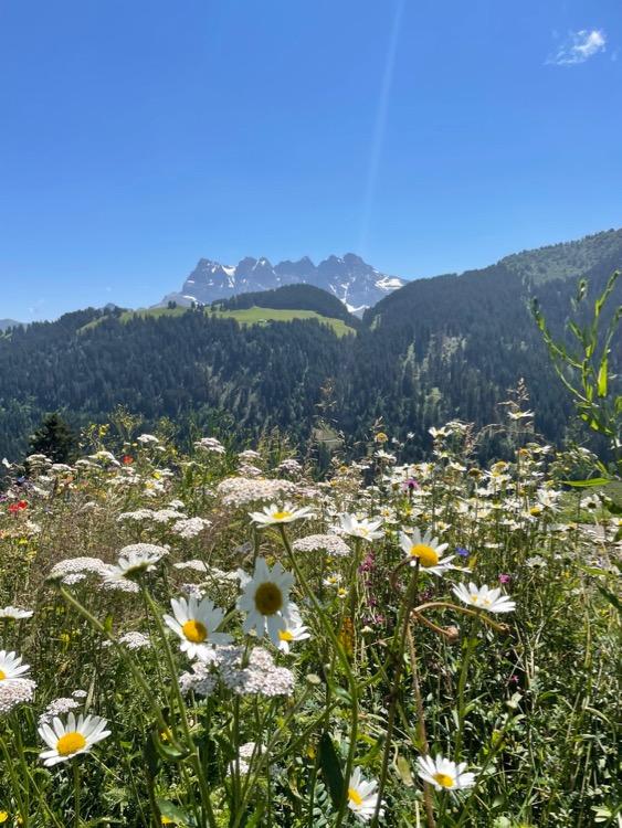 Blue skies, dog daisies, woodland and the Dents Du Midi.